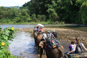 Riding elephants through the jungle, Thailand